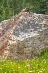 DSCF2471 (LEo Spizzirri) Tags: angela backpacking cascademountains forest hernan hike lake luciano lyman marmot matthew mountain mountains nick northwest pacific pacificnorthwest peter pnw spidermeadow washington woods