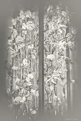 Flower Study in Monochrome, no. 29_52_2019 (a g a t a d p r a w d z i k) Tags: photography photo photoart fineart fotografiaartystyczna flowers philadelphiaflowershow flickrart canoneos6d artdigital blackwhitephotos blackwhite bw monochrome toned creativity artistic mystyle mylife