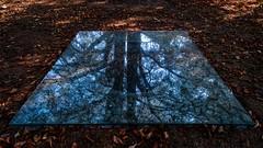 DSCF8174 ~ The mirror (Teresa Teixeira) Tags: porto serralves park artinstallation trees mirror reflection art installation teresateixeira