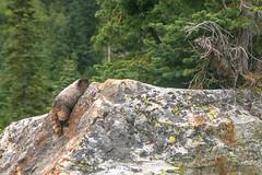DSCF2467 (LEo Spizzirri) Tags: angela backpacking cascademountains forest hernan hike lake luciano lyman marmot matthew mountain mountains nick northwest pacific pacificnorthwest peter pnw spidermeadow washington woods