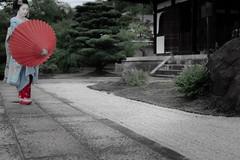 Maiko_20190630_121_23 (Maiko & Geiko) Tags: 20190630 kouunji temple kanohisa kyoto maiko 舞妓 光雲寺 叶久 京都 叶家 kanoya ksumika