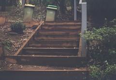 Steps (photo 2) (Matthew Paul Argall) Tags: kodakbrownieno2 fixedfocus 120film 120 mediumformat steps stairway boxcamera lomographyfilm