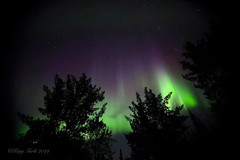Purple and Green Lights (Katy on the Tundra) Tags: northernlights auroraborealis aurora