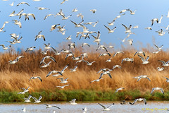 Then they all flew away [Explored] (Roy Prasad) Tags: green sony a9 600mm f4 prasad royprasad bird shorelinepark mountainview california nature water reflection bokeh
