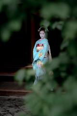 Maiko_20190630_121_25 (Maiko & Geiko) Tags: 20190630 kouunji temple kanohisa kyoto maiko 舞妓 光雲寺 叶久 京都 叶家 kanoya ksumika