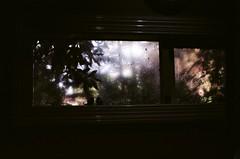 Kitchen window (Matthew Paul Argall) Tags: beirettevsn 35mmfilm ektar100 kodakektar100 100isofilm window