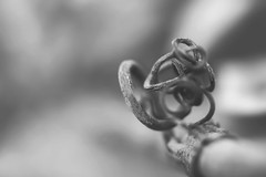 in a knot (rockinmonique) Tags: muttartconservatory branch small macro mono monochrome blackandwhite bw bokeh moniquewphotography canon canont6s tamron tamron45mm copyright2019moniquewphotography