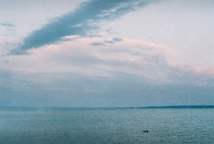 Keszthely (Moesko Photography) Tags: analogue olympusom2 balaton keszthely lake summer water evening sunset animal duck clouds sky nature outdoor