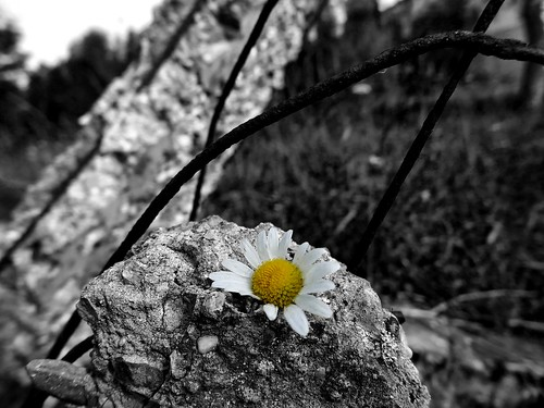 Life above all ©  Sergei F