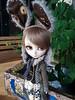 Llegadas - White Rabbit Steampunk (Lunalila1) Tags: doll groove isul steampunk rabbit world alice insteampunkworld bunny arlo llegadas unboxing box white