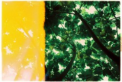 Sài Gòn | 2019 (grousespouse) Tags: vietnam 35mm analog film nikonf3 nikonseriese28mmf28 fujifilm fujieternavivid125 eterna vivid tungsten cinematic filmphotography colorfilm firstframe analogue colourfilm psychedelic mood trippy green electric surreal lightleak asia argentique atmosphere tree nature plant garden light grain wideangle lomography scanned croplab grousespouse 2019