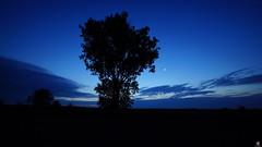 PAYSAGES DE PICARDIE 102 (aittouarsalain) Tags: picardie landscape paysage heurebleue bluehour aube aurore matin lune arbre silhouette