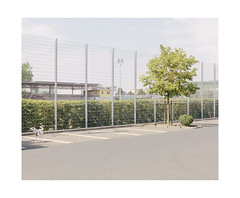 Doggy and the Tree (Thomas Listl) Tags: thomaslistl color dog animal tree green fence lines bright summer sunlight topography mundane banal würzburg 50mm sky parkinglot space