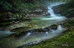 Mossklamm_4 (gnarlydog) Tags: austria creek stream forest waterfall longexposure moss green mist rocks rockpools serene tranquil fresh nature landscape