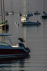 The Inspector (Bud in Wells, Maine) Tags: gbh maine marinepark rockport september boats fog harbor heron morning reflections