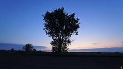 PAYSAGES DE PICARDIE 106 (aittouarsalain) Tags: picardie landscape paysage aurore aube levant arbre ciel silhouette