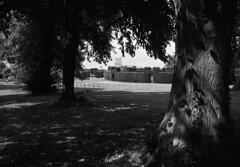 Rockingham Castle (mdpF2) Tags: leica m2 summicron 352 asph ilford panf ddx film bw english heritage castle trees