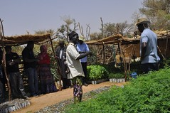 Joint Reflection, Learning and Monitoring Field Visits in Niger