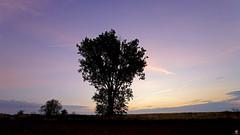 PAYSAGES DE PICARDIE 107 (aittouarsalain) Tags: picardie landscape paysage aurore aube levant ciel arbre silhouette
