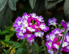 Color-Rama. (Omygodtom) Tags: colorrama natural flora flower street wildflower algorithm flickriver macro lowkey
