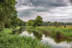 River Meanders (jayneboo) Tags: attingham park national trust landscape cows cattle river water riverbanks reeds trees shropshire noctilux 50mm