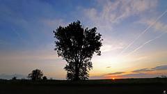 PAYSAGES DE PICARDIE 108 (aittouarsalain) Tags: picardie paysage lanscape aurore levant aube leverdesoleil arbre ciel silhouette