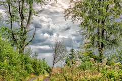 28082019-DSC_0009 (vidjanma) Tags: petitestailles arbres chemin nuages