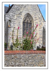 rose tremiere (Christ.Forest) Tags: rose tremiere rosetremiere eglise mur fleurs nature soleil brique