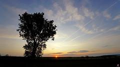 PAYSAGES DE PICARDIE 109 (aittouarsalain) Tags: picardie landscape payasage aurore levant aube arbre soleil ciel nuages leverdesoleil