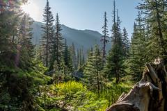 DSCF2594 (LEo Spizzirri) Tags: okanoganwenatcheenationalforest cascademountains forest hike hiking marmot meadow mountains northwest pacific pacificnorthwest pnw spidermeadow valley washington