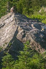 DSCF2576 (LEo Spizzirri) Tags: okanoganwenatcheenationalforest cascademountains forest hike hiking marmot meadow mountains northwest pacific pacificnorthwest pnw spidermeadow valley washington