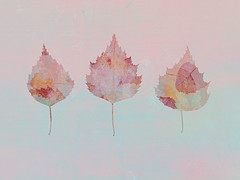 240/365 (Jane Simmonds) Tags: leaves birchleaves abstract iphone multipleexposure 3652019