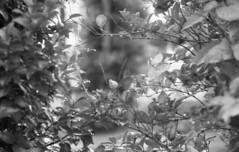 190713_NikonFG20_020 (Matsui Hiroyuki) Tags: nikonfg20 nikonainikkor85mmf20 orientalnewseagulliso100 epsongtx8203200dpi