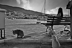 η μοναξια μου και οι 4 γατες (Love me tender ♪¸.•*´¨´¨*•.♪¸.•*´) Tags: four bench sitting backshot lonely cats animals mountains street island poros greece saronic sunset summer buildings view blackandwhite