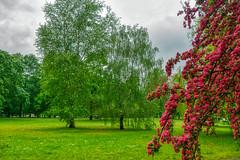 Ogród Saski (Varsovia - Warsaw) (Carlos M. M.) Tags: poland polonia warsaw varsovia hdr sony sonyalpha6000 trees naturaleza nature parque park
