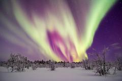 Aurora Borealis (bholmbom81) Tags: trees winter sky snow night stars bush sweden lappland kiruna auroraborealis norrbotten krokvik bjornholmbom björnholmbom