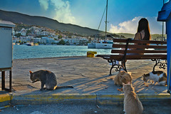 η μοναξια μου και οι 4 γατες (Love me tender ♪¸.•*´¨´¨*•.♪¸.•*´) Tags: four bench sitting backshot lonely cats animals mountains street island poros greece saronic sunset summer buildings view