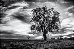 Four Months ago... (Ody on the mount) Tags: anlässe bäume canon fototour g7xii himmel landschaft pflanzen powershot rahmen schwäbischealb wolken bw blackandwhite clouds frame landscape monochrome sw schwarzweis sky tree