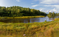 Panorama of the northern forest. Olonets Isthmus. Река Важинка у села Согиницы. (atardecer2018) Tags: россия природа пейзаж панорама 2019 лето лес russia river paisaje landscape река важинка согинцы panorama