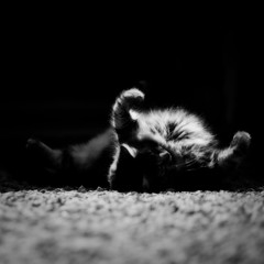 Haiku (Xnoszam) Tags: cat chat monochrome nb bnw lowkey