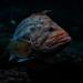 Monterey Bay Aquarium 1/16/19 #montereyaq