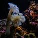 Monterey Bay Aquarium Coral Reef 1/16/19 #montereyaq