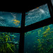 Monterey Bay Aquarium Kelp Forest Exhibit 1/16/19 #montereyaq