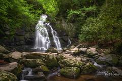 Spruce Flats Falls (Reid Northrup) Tags: rrs nature smokys spruceflatfalls cascade forest greatsmokymountainnationalpark longexposure nikon reidnorthrup river rocks scenic stream tennessee trees tremont water waterfall