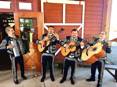 """The Mexican National Marine Orchestra"" (Halvorsong) Tags: mariachi band music guitar guitars mexico wedding serenade barn culture world travel composition quartet orchestra marines song singing art projectamerica halvorsong explore discover rhythm america mexican usa fun celebration national summer summertime"