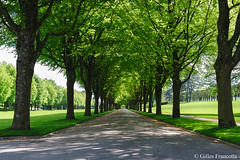 Green alley (gillesfrancotte) Tags: 2012 american argonne cemetery cimetière france mai memorial meuse outdoor romagne cimetièreaméricain green landscape may paysage spring tree perspective