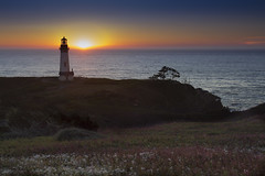 Yaquina Head Lighthouse, Newport, Oregon (Bonnie Moreland (free images)) Tags: oregon coast shore ocean pacific sunset cliffs lighthouse field flowers summer yaquinahead newport