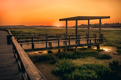 Sunset (Tiago Lourenco) Tags: sunset sun national nature outside sky orange green tree light summer lake garden portugal algarve landscape