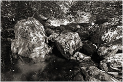 hoegne 134 (beauty of all things) Tags: belgien belgium hohesvenn hockai hoëgne bach creek sw bw stones rocks