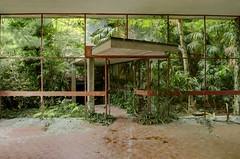 Jungle Door